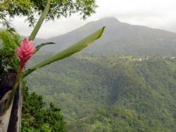 Dominica mountains by Kelly N. Saunders 